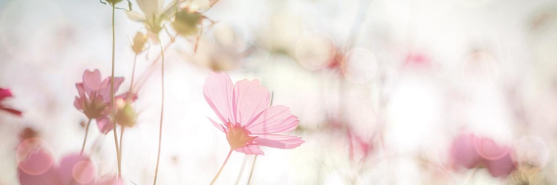 Blumenimpressionen Erlebnis Schönheit Bad Kreuznach